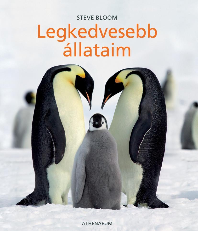 LEGKEDVESEBB ÁLLATAIM -