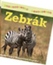 ZEBRÁK - SZÓRAKOZTATÓ ÁLLATVILÁG