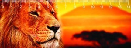 KILIMAJARO LIONS OROSZLÁNOK 3D VONALZÓ 148 * 55 MM