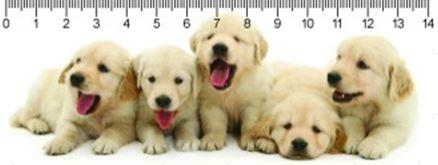 RETRIEVER PUPPIES RETRIEVER KÖLYKÖK 3D VONALZÓ 148 * 55 MM